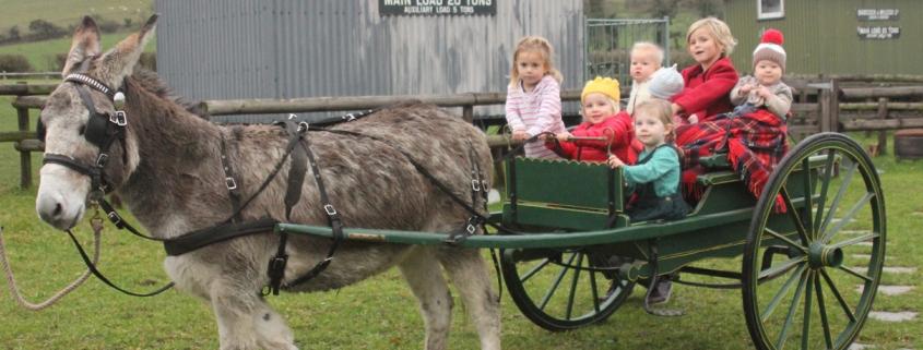Donkey-Grandhildren