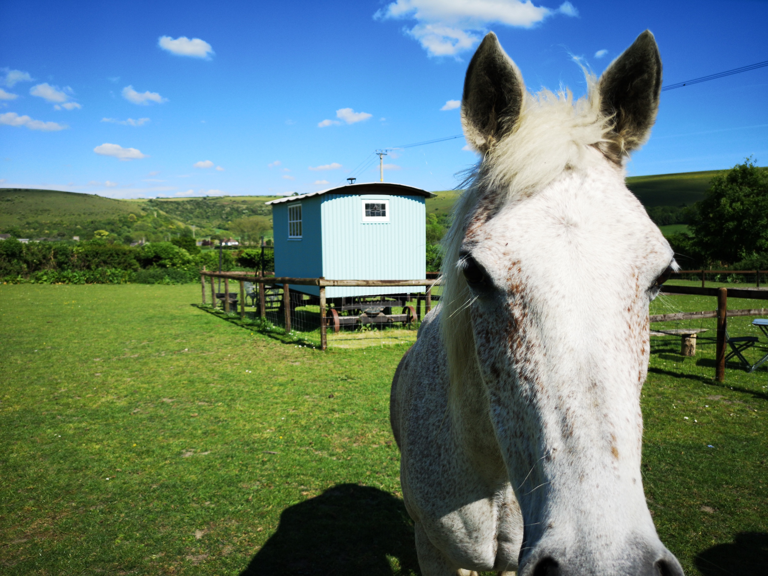 Glamping-with-Horse