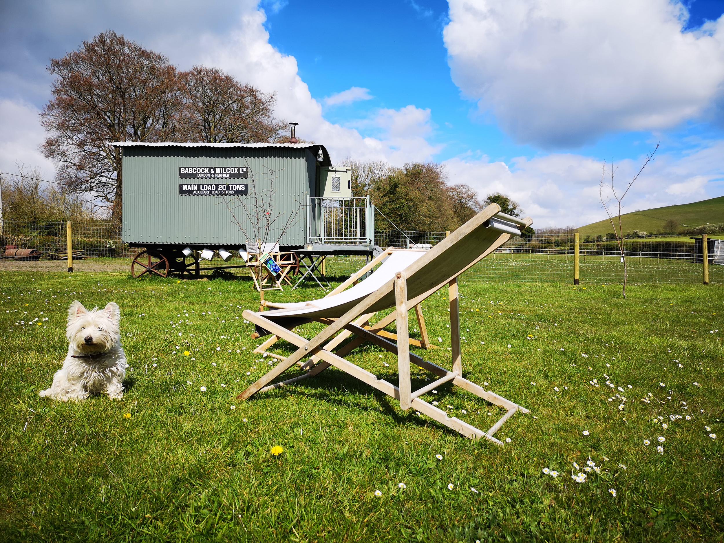 Dog-friendly-shepherds-hut